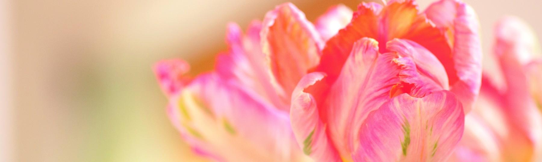 Blumen - Frauenarztpraxis Dr. Lyding